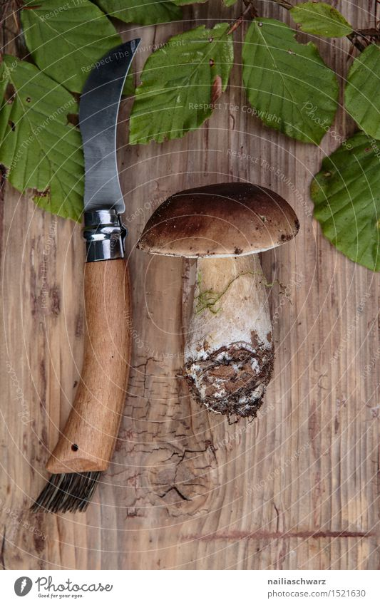 Frische Steinpilze aus dem Wald Lebensmittel Ernährung Moos Blatt Hut frisch braun grün pilzmesser fichtensteinpilz edelpilz ganz mehrere stiel Pilz waldpilz