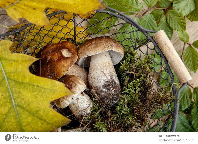 Frische Steinpilze aus dem Wald Lebensmittel Moos Blatt Hut Duft frisch braun grün Korb sammeln Pilz fichtensteinpilz edelpilz ganz mehrere stiel waldpilz erde