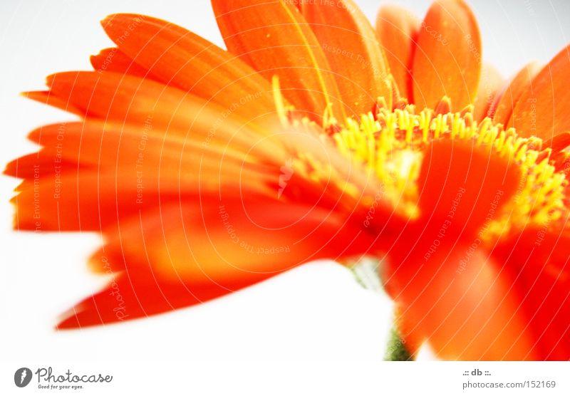 .:: FRÜHLINGStraum ::. Blume gelb weiß grün Unschärfe Frühling orange bletter Blühtenstaub
