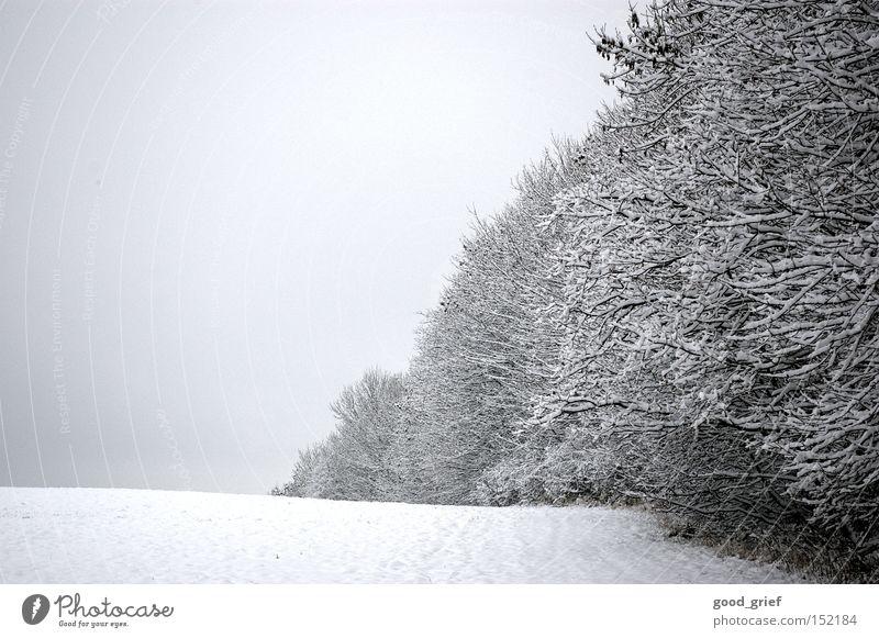 weiß bis grau Baum Winter Blatt Wolken Wald Schnee Gras Landschaft Eis Raureif Baumreihe