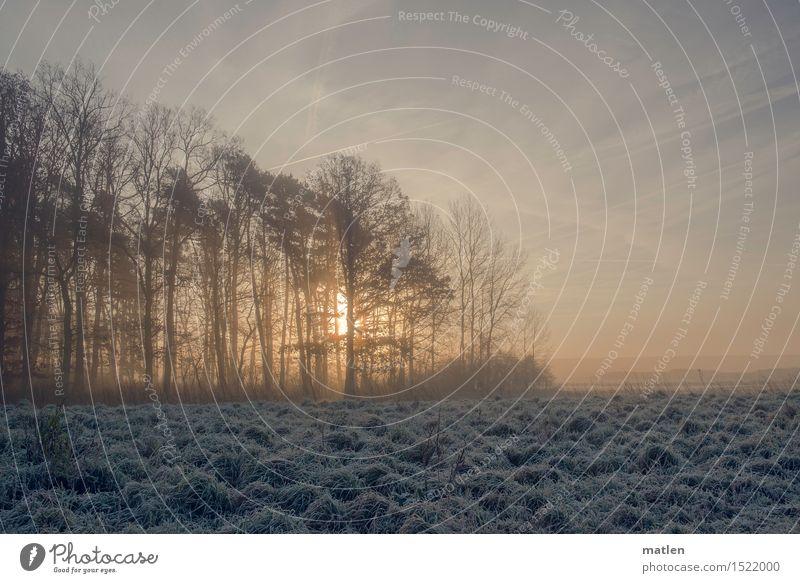 Am Waldrand Landschaft Pflanze Himmel Wolken Horizont Winter Wetter Schönes Wetter Nebel Eis Frost Schnee Baum Gras Feld Menschenleer kalt blau braun gelb weiß