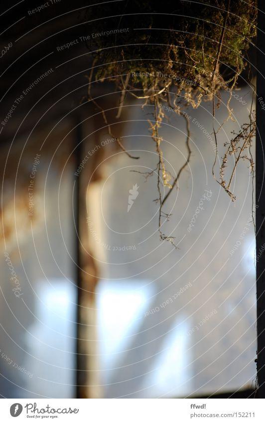 Stille Fenster Fensterscheibe Scheibe alt Einsamkeit verloren vergessen schäbig Vergänglichkeit Moos Zeit Erinnerung ruhig Überleben unberührt verfallen