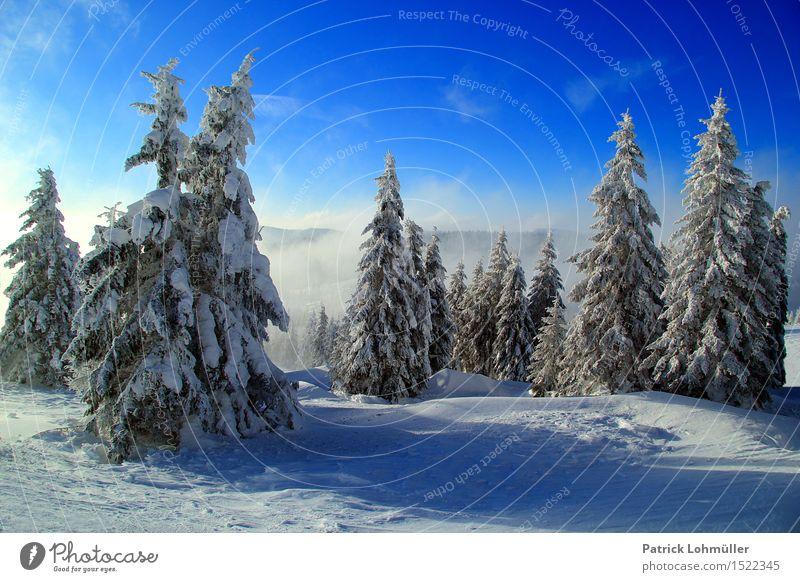 Schneebäume Himmel Natur Ferien & Urlaub & Reisen blau schön weiß Baum Landschaft Einsamkeit Wolken ruhig Winter Berge u. Gebirge kalt Umwelt Schnee