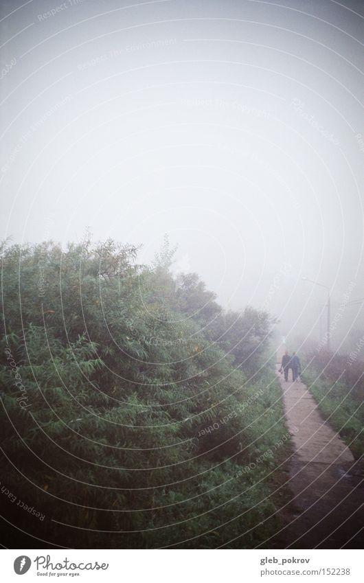 Mensch Himmel weiß grün Blume Straße Blüte Wetter Nebel Russland Sibirien Umnebelung