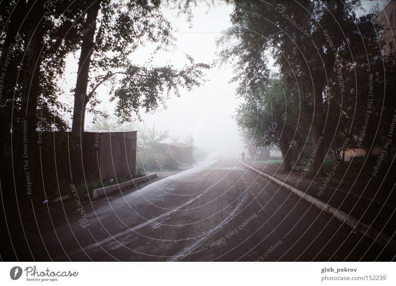 Mensch Himmel weiß grün Blume Straße Herbst Blüte Wetter Nebel Russland Sibirien Umnebelung