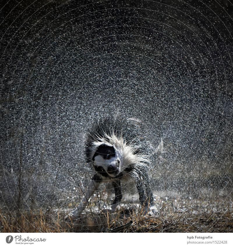 Nasser Hund Natur weiß Tier schwarz kalt Wiese Bewegung natürlich Schwimmen & Baden See Stimmung Feld frisch ästhetisch genießen
