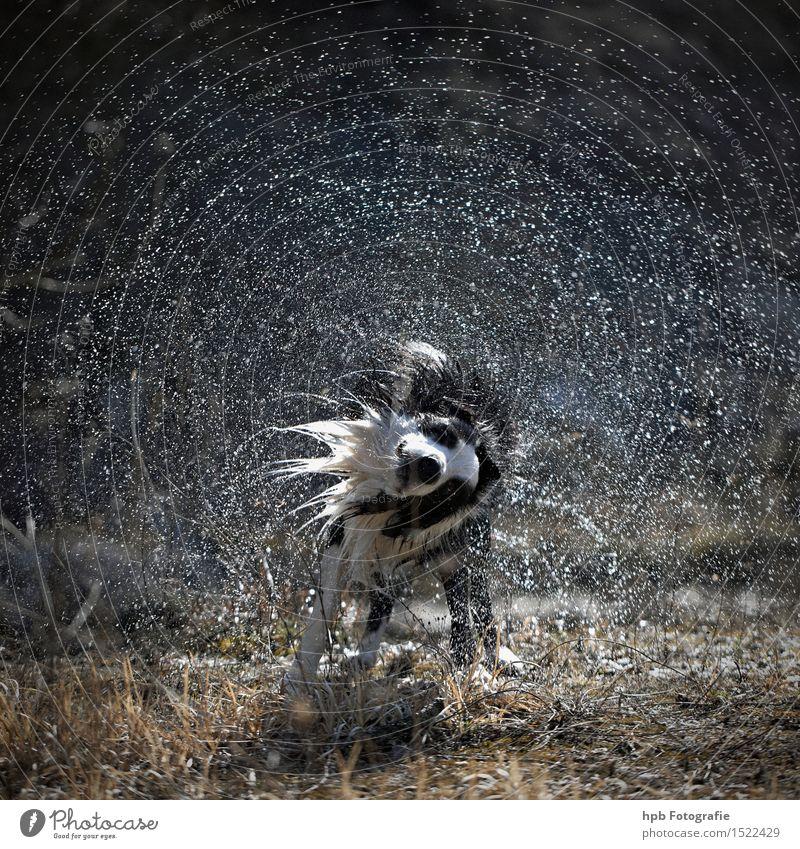 Nasser Hund Natur Tier Seeufer Flussufer Moor Sumpf Teich Bach Haustier frieren Reinigen Schwimmen & Baden Flüssigkeit Fröhlichkeit Gesundheit nass natürlich