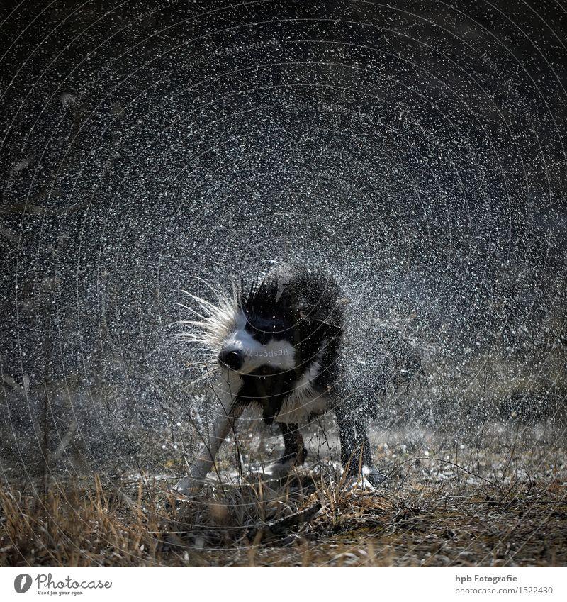 Nasser Hund Tier Haustier 1 Reinigen Schwimmen & Baden tauchen ästhetisch Flüssigkeit kalt nass Sauberkeit schwarz weiß Gefühle Stimmung Glück Fröhlichkeit