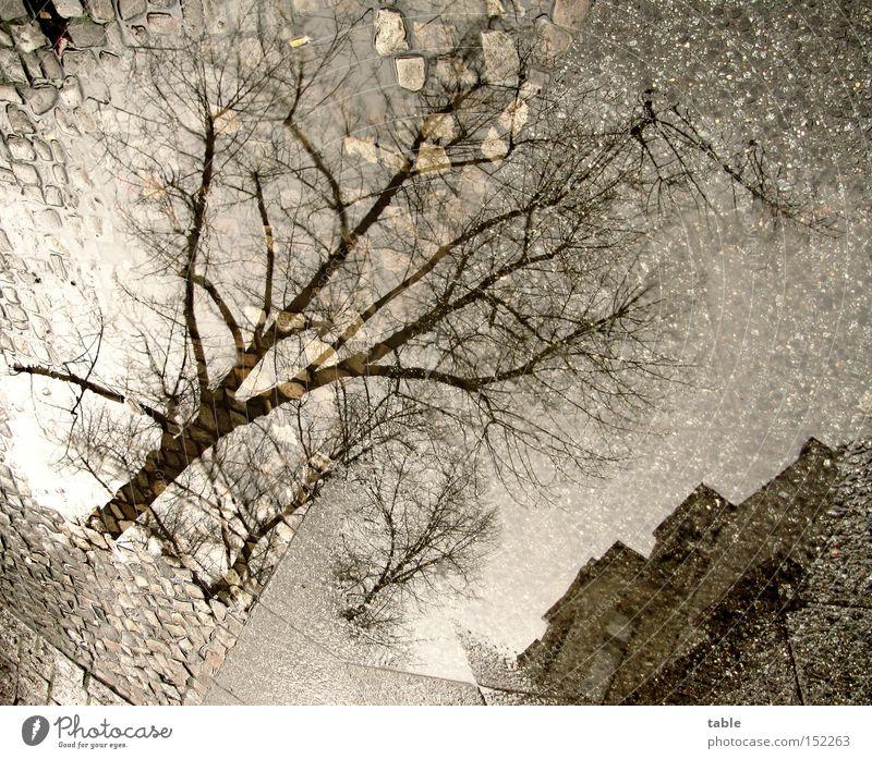 Weiße Weihnacht Wasser Pfütze Bürgersteig Baum Haus Stein kalt grau dunkel ungemütlich Wetter Winter Verkehrswege Himmel Reflexion & Spiegelung verrückt