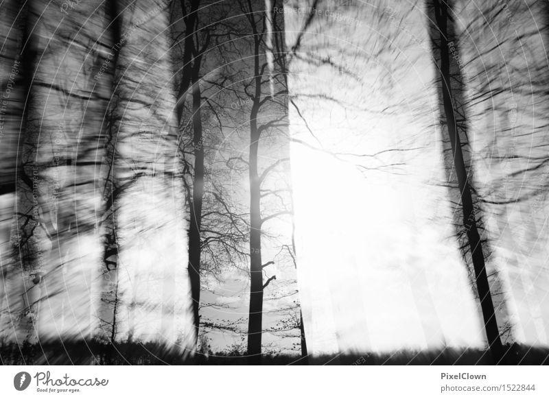 Wald Natur Ferien & Urlaub & Reisen Pflanze weiß Baum Landschaft Blatt dunkel schwarz Umwelt Leben Herbst Holz Kunst außergewöhnlich