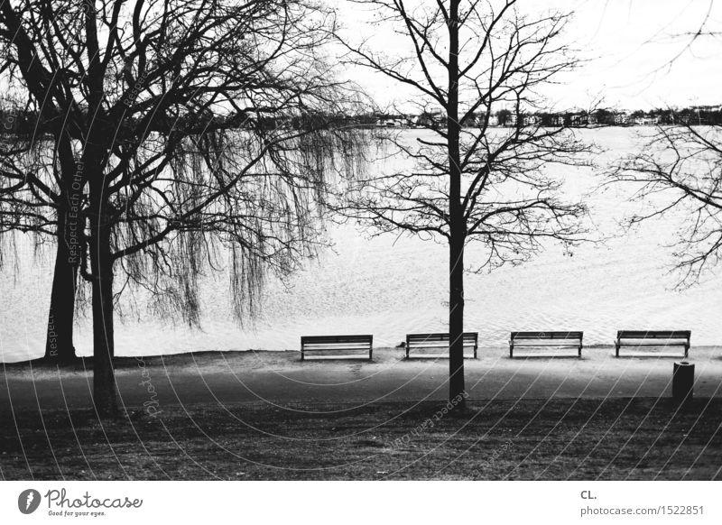 alster Umwelt Natur Landschaft Wasser Herbst Winter Baum Wiese See Fluss Hamburg Bank Müllbehälter Pause ruhig Schwarzweißfoto Außenaufnahme Menschenleer