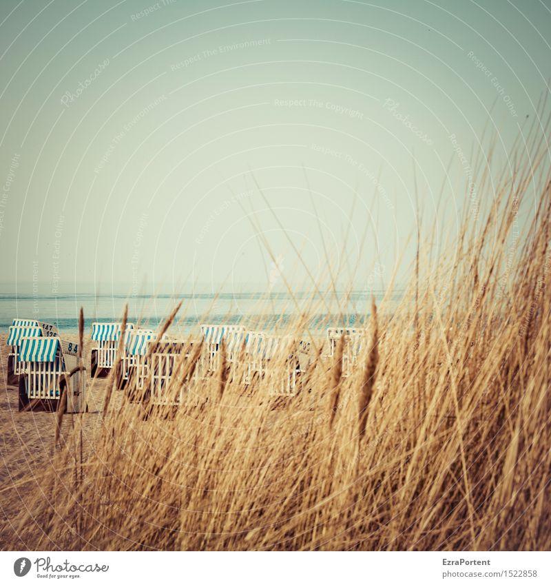 Strandbeobachtung Erholung ruhig Ferien & Urlaub & Reisen Tourismus Ausflug Sommer Meer Natur Landschaft Himmel Frühling Schönes Wetter Gras Ostsee blau braun