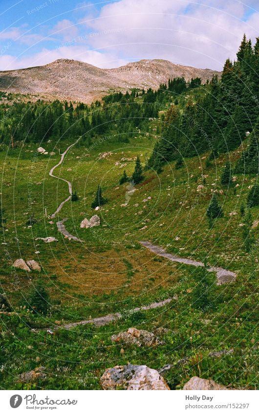 Auf dem Weg nach ganz oben Baum Wolken Berge u. Gebirge Wege & Pfade wandern Freizeit & Hobby Gipfel Kanada Blumenwiese Nationalpark Alberta Bergwiese
