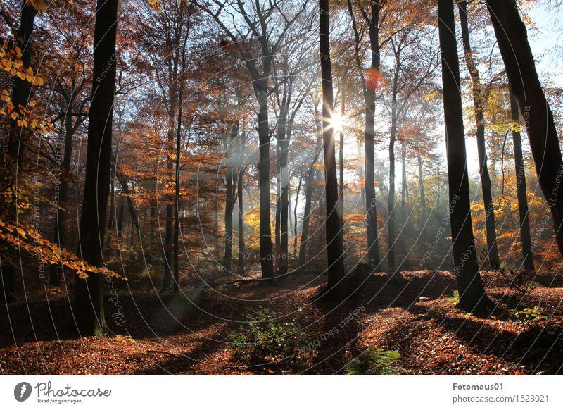 Herbstwald I Natur Landschaft Sonne Sonnenlicht Schönes Wetter Baum Wald blau braun gelb orange Stimmung Farbfoto Außenaufnahme Menschenleer Sonnenstrahlen