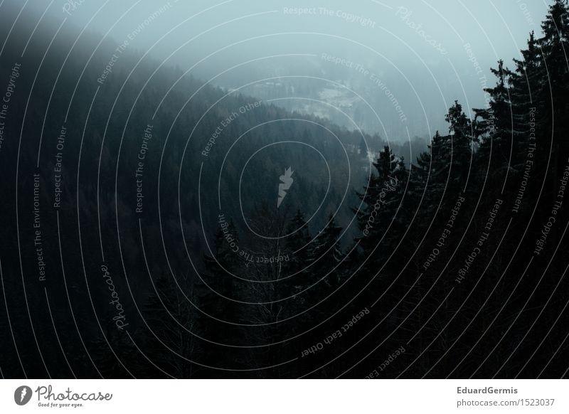 Winterwald Natur Ferien & Urlaub & Reisen blau grün weiß Landschaft Ferne dunkel Wald schwarz Umwelt Schnee Nebel Angst bedrohlich