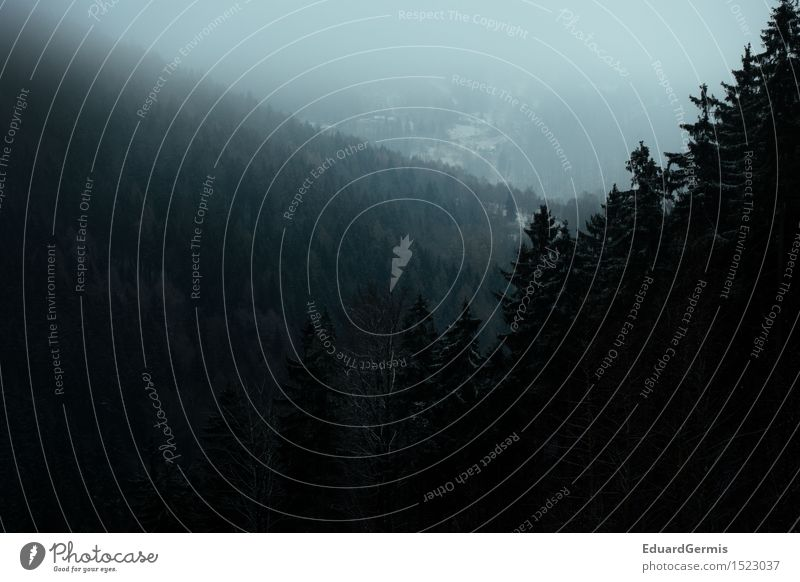 Winterwald Umwelt Natur Landschaft schlechtes Wetter Nebel Schnee Wald Hügel bedrohlich dunkel gruselig blau grün schwarz weiß Angst Respekt Abenteuer