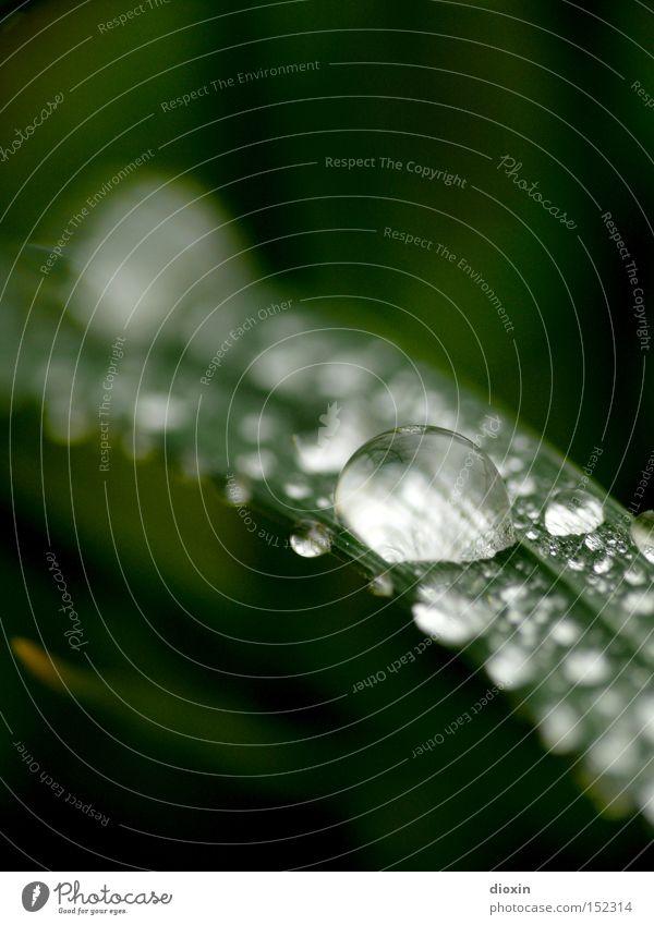 Morgentau #1 Wasser Wassertropfen nass feucht Gras Halm Wiese Natur grün Unschärfe Makroaufnahme Nahaufnahme fuzziness