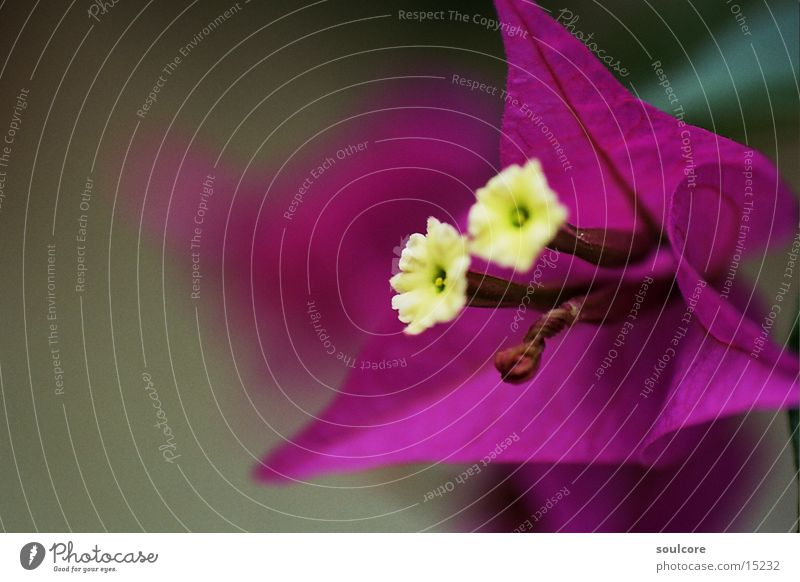 contrast flower Blume violett Blüte Natur