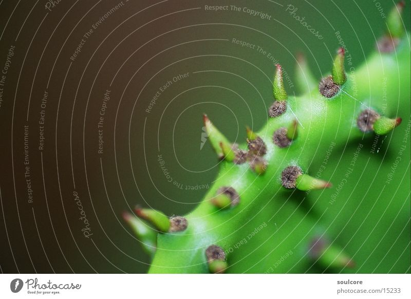 Kaktus Detail Natur Blume Stachel