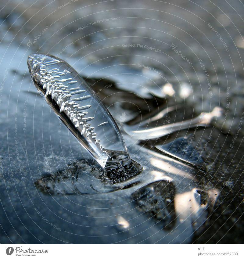 Standing Icicle Winter Kunstwerk Mauer Wasser Spiegel Natur Schnellzug Licht Eiszapfen stehen Vergänglichkeit kalt Makroaufnahme Nahaufnahme schön gefrohren