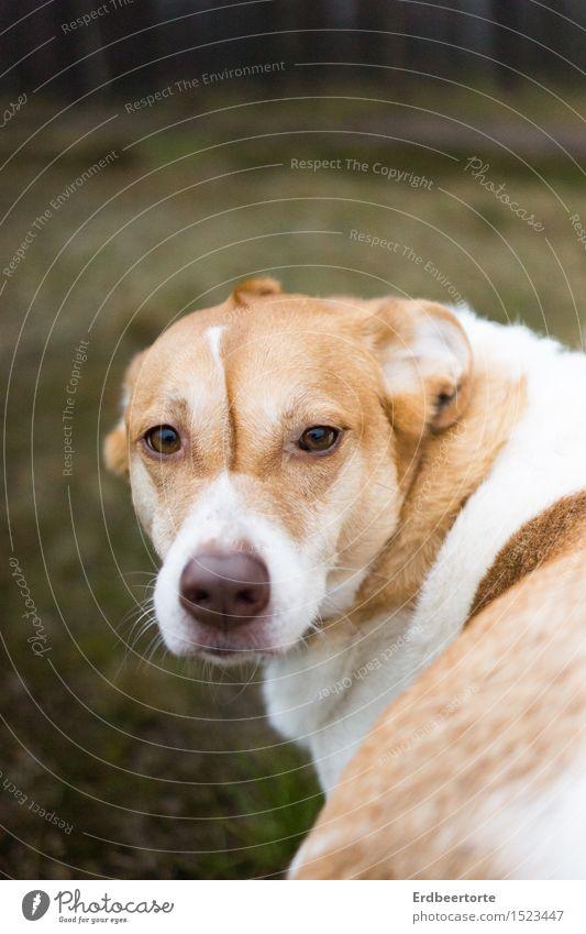 Don't look back in anger Hund schön Tier Freundschaft beobachten einzigartig niedlich weich Freundlichkeit Haustier Sympathie Tierliebe Mischling