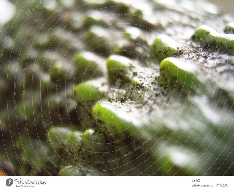 Avocadoscape grün Gesundheit lecker Bioprodukte ökologisch Ekel