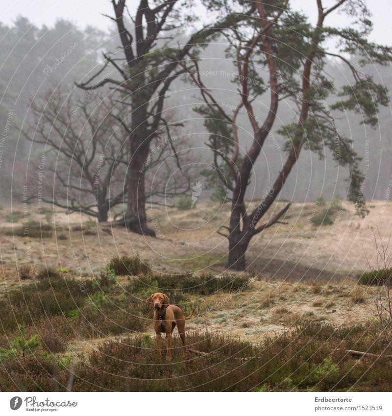 allein Landschaft Winter Nebel Wald Tier Haustier Hund Jagdhund 1 beobachten entdecken stehen warten wild braun Tierliebe Fernweh Einsamkeit Abenteuer Erwartung