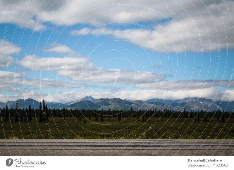 Unterwegs in Alaska... Ferien & Urlaub & Reisen Abenteuer Sommerurlaub Natur Landschaft Himmel Wolken Horizont Schönes Wetter Baum Gras Sträucher Wiese Wald