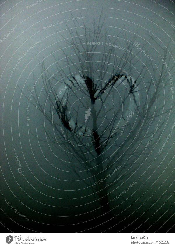 Nebelherz Baum Winter Liebe grau Traurigkeit Regen Herz Nebel Ast Vergänglichkeit trüb