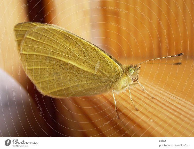 Mein Haustier 3 Insekt Schmetterling Fühler Rüssel entfalten