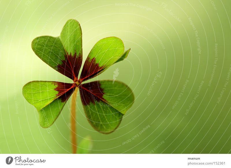 Viel Glück! grün Sommer gelb Frühling Zufriedenheit Erfolg Zukunft Hoffnung Schriftstück Wunsch Feste & Feiern Zeichen Silvester u. Neujahr positiv Blume
