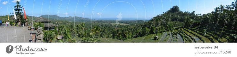 Bali's Reisterrassen (Panorama) Natur Landschaft groß Horizont Indonesien Landwirtschaft Palme Ackerbau Terrasse Panorama (Bildformat) Feld Los Angeles Reisfeld