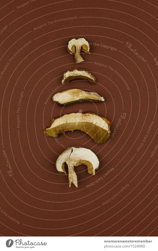 Pilzhaufen Kunst Kunstwerk ästhetisch getrocknet braun Wald Waldboden Waldpflanze Symmetrie Design angeordnet graphisch lecker Kräuter & Gewürze Heimat