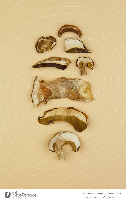 Ausbeute Pilzsuche Kunst Kunstwerk ästhetisch Pilzhut Pilzsucher Pilzkopf Pilzsuppe Sammler beige Sammlung Anhäufung viele Collage Kräuter & Gewürze Küche