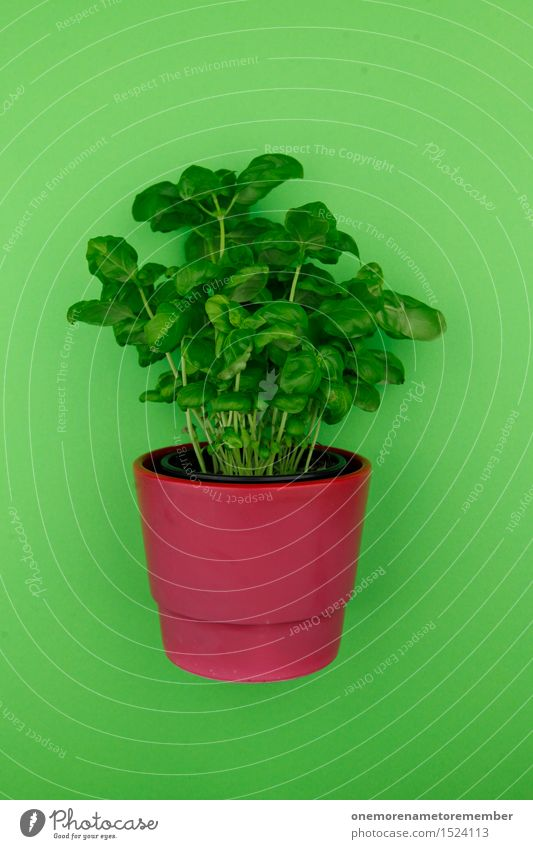 Mit Würze 2 Kunst Kunstwerk ästhetisch Kräuter & Gewürze Basilikum Basilikumblatt grün Grünpflanze Küchenkräuter Topf Topfpflanze rot Blumentopf Design