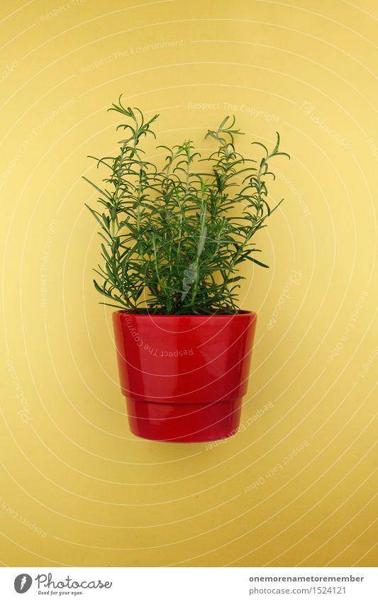 Rosmarin im Topf Kunst Kunstwerk ästhetisch Pflanze Topfpflanze rot gelb grün Küchenkräuter Kräuter & Gewürze Farbfoto mehrfarbig Innenaufnahme Studioaufnahme