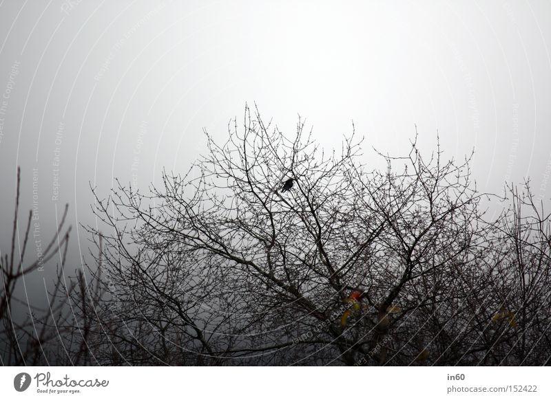 Einsamer Vogel Baum Winter Einsamkeit Sträucher Amsel