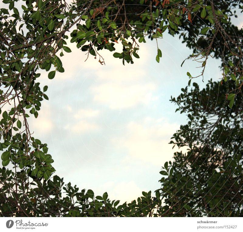Insight Outsight. Blatt Himmel Wolken blau grün Baum Ast Natur Luft Aussicht Holz Wald Licht