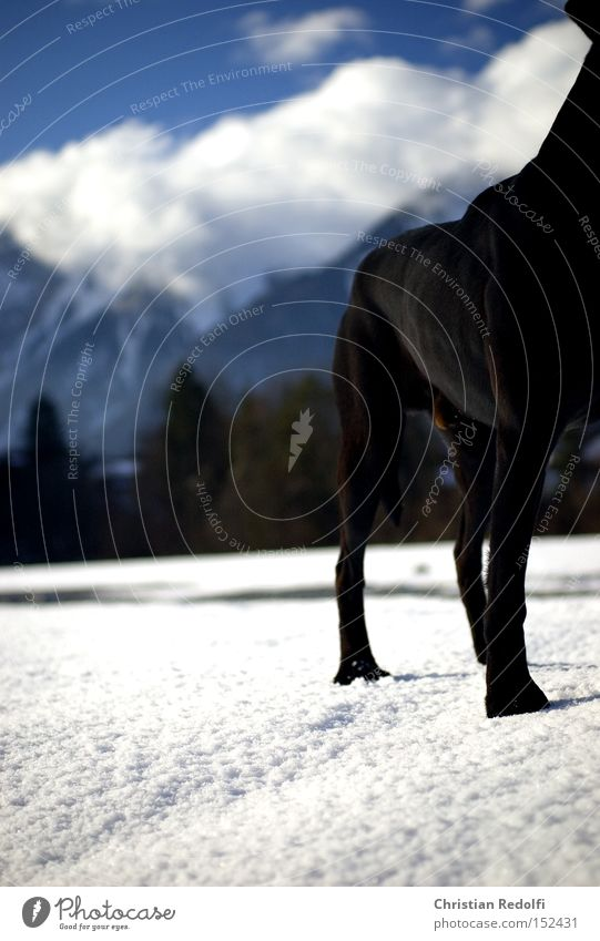 25.dezember Hund Labrador Himmel Wolken Spaziergang blau Landschaft Berge u. Gebirge Schnee Winter Tier