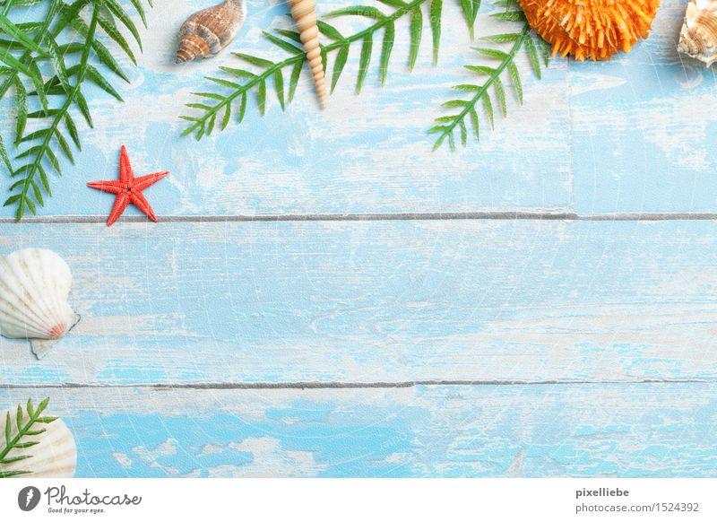 Sommer Natur Ferien & Urlaub & Reisen Pflanze blau Meer Erholung Blatt Strand Küste Holz Schwimmen & Baden Freizeit & Hobby Ausflug Wellness Ostsee