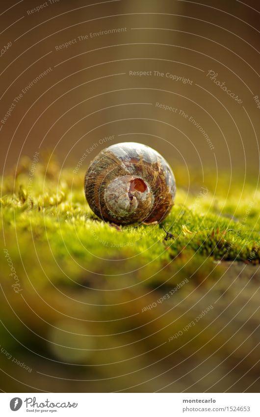 lost place Umwelt Natur Erde Sonnenlicht Pflanze Moos Grünpflanze Wildpflanze Schneckenhaus alt dünn authentisch einzigartig kaputt klein nah natürlich rund