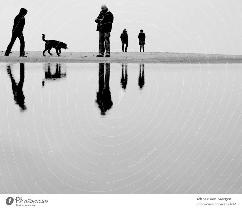weihnachtsgesellschaft Frau Mann Wasser weiß Strand Meer Ferien & Urlaub & Reisen ruhig schwarz Reflexion & Spiegelung Erholung Hund Familie & Verwandtschaft