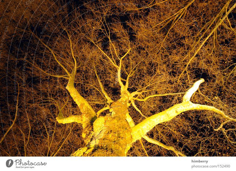 black and gold Baum Baumstamm Natur Strukturen & Formen Netzwerk Licht Lichttechnik Beleuchtung Design Botanik Jahreszeiten Herbst Holz Park beleuchtungstechnik