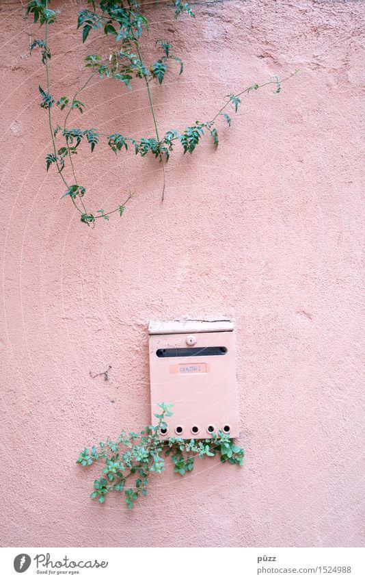 Briefkasten Natur Stadt Pflanze grün Blatt Haus Wand Traurigkeit Gefühle Mauer Stein Fassade Metall rosa Wohnung Häusliches Leben