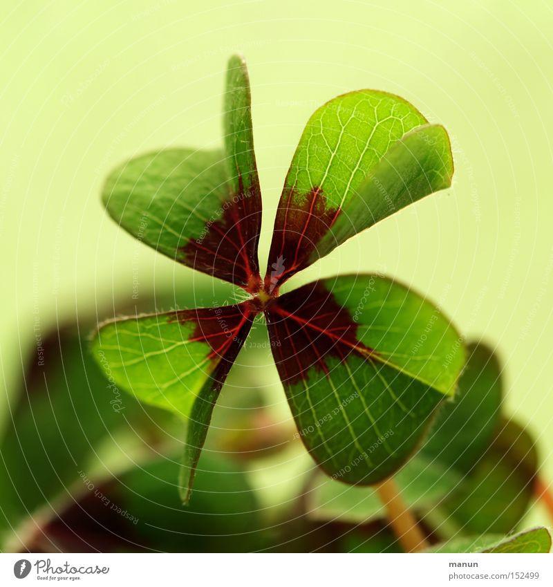 Glücksbringer grün Freude Erfolg Klee Feiertag Geburt Glückwünsche Gruß Blume Glücksklee Alles Gute
