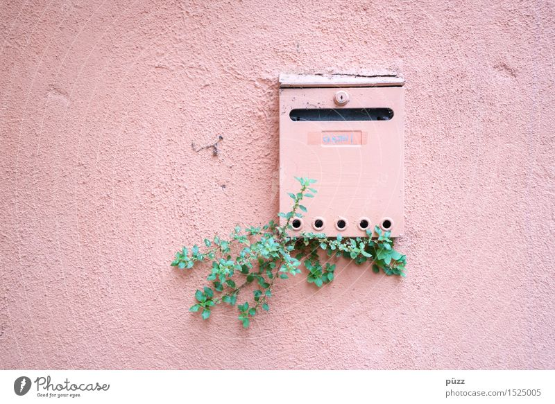 Briefkasten Natur Stadt Pflanze grün Einsamkeit Blatt Haus Wand Traurigkeit Mauer Stein Fassade Metall rosa Wohnung Häusliches Leben