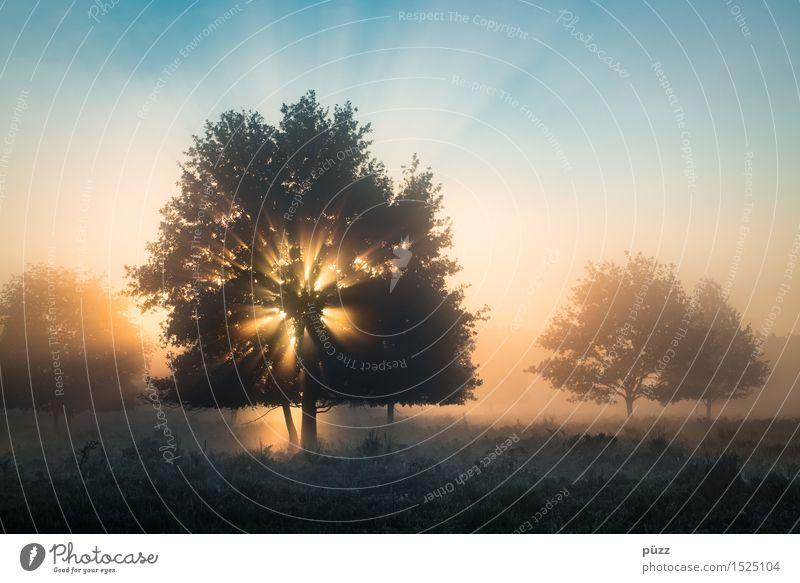 Morgengrauen Umwelt Natur Landschaft Pflanze Himmel Wolkenloser Himmel Sonne Sonnenaufgang Sonnenuntergang Sonnenlicht Schönes Wetter Baum Wald Heide leuchten