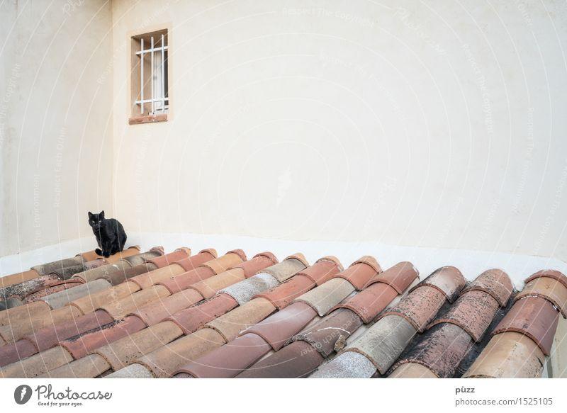 Black Cat Dorf Menschenleer Haus Bauwerk Gebäude Architektur Mauer Wand Fenster Dach Tier Haustier Katze 1 Stein Beton braun schwarz weiß Gefühle Glück