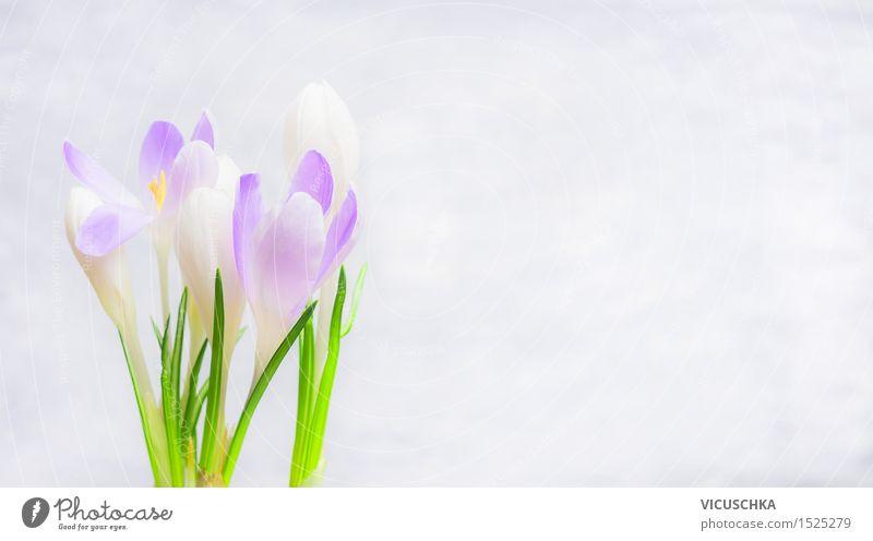 Krokusse Blumen auf hellem Hintergrund Stil Design Wohnung Garten Dekoration & Verzierung Feste & Feiern Muttertag Ostern Natur Pflanze Frühling Blatt Blüte