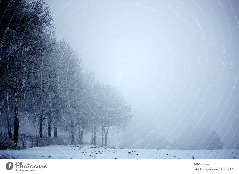 Kurz vor 2009 Nebel Wege & Pfade unterwegs Baum Allee unklar Andeutung Winter Schnee Straße Spaziergang Neuanfang Ende Frieden